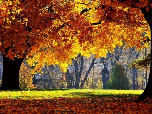 autumn-trees-leaves-park-yellow-shadow